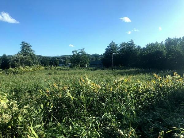 車窓から見た休耕地