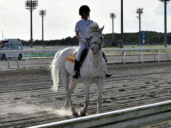 誘導馬のテン太