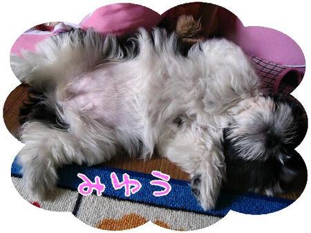 miyuu-01-03-1.jpg