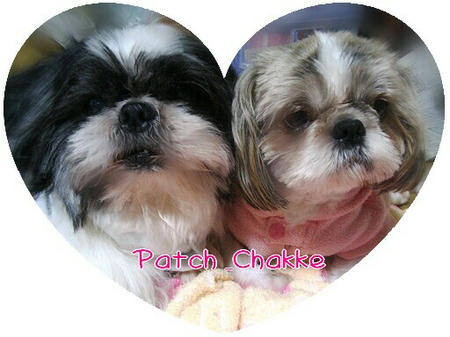 patch-chakke-01-03-1.jpg