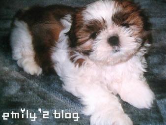 mon-puppy-12-10-3.jpg