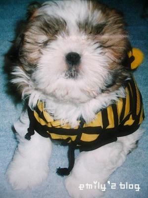 mon-puppy-12-10-4.jpg