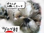 ブログ村 犬ブログ 犬 多頭飼いへ