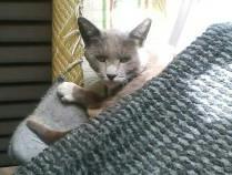庭に来た猫(2007年4月)