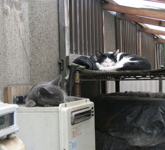 子猫たちは昼寝の態勢