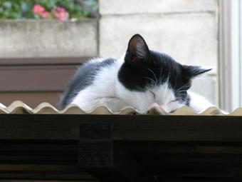 マル 眠り猫