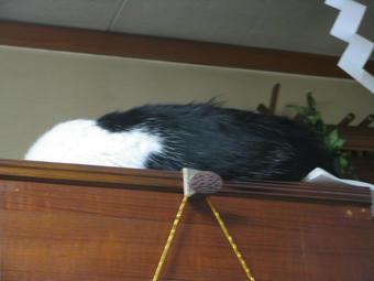 マルは食器棚の上で熟睡