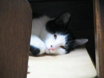 マル寝顔1