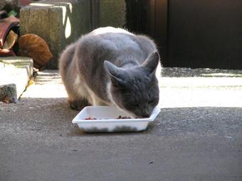 グレ@陽だまりで食事1