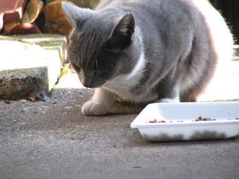 グレ@陽だまりで食事3