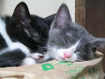2匹おやすみちゅう@5月4日