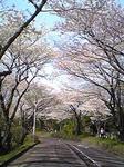 090405mizumoto2.JPG
