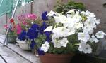 flowers7/9