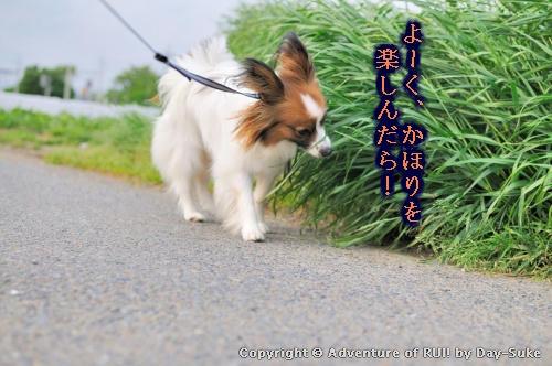 kiji_100522_002.jpg