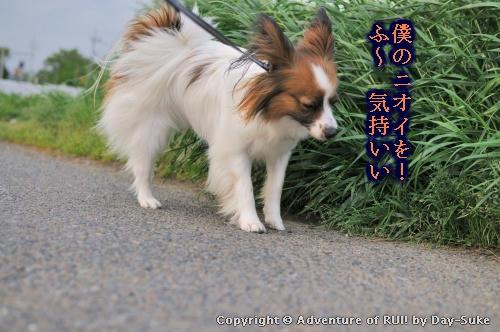 kiji_100522_003.jpg