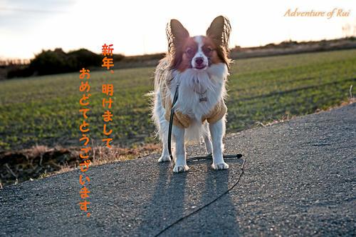 11_01_01-3.jpg