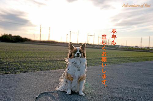 11_01_01-4.jpg