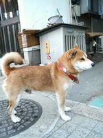 2008.12.13.09.JPG