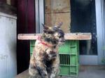 ラーメン屋の猫