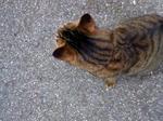 マンション猫2