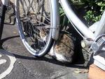 自転車ねこ