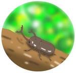 「季節もの(夏・カブト虫) - 暑中見舞い・チラシ・ポスター用 」のイラスト