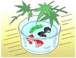 「季節もの(夏・金魚鉢) - 暑中見舞い・チラシ・ポスター用 」のイラスト