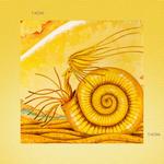 iPad(アイパッド)用壁紙 ・ ファンタジー、メルヘン・イラストレーション 「アンモナイトの記憶」