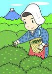 八十八夜・茶摘み・お茶摘み・お茶・茶畑・新茶・茶摘み娘・春の歳時記