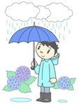 入梅・梅雨・梅雨入り・梅雨時・梅雨の季節・雨・紫陽花・アジサイ・あじさい
