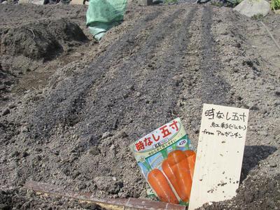 tokinasigosun.jpg