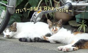 2009_B40.jpg