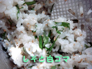 2009_B87.jpg