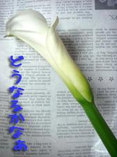 2009_B131.jpg