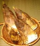 朝掘りの新鮮タケノコを販売します