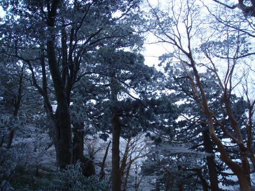 思わず立ち止まってしまうほど樹氷がきれい。