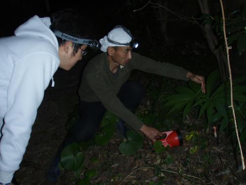 夜の森散策。