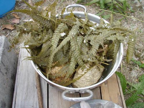 シダの上におもちを置いて蒸し焼きに。