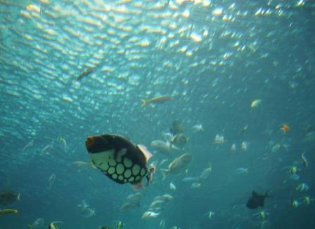 水の中から空を見上げる
