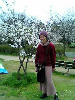sakura+mami.jpg