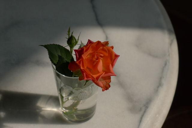 nomado.rose.jpg