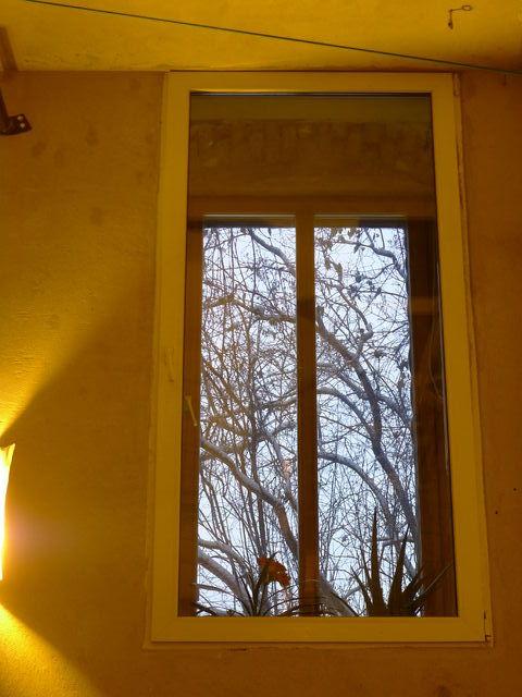 olivia_window.jpg