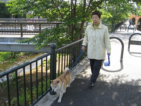 「散歩でキャッチ」,改良型