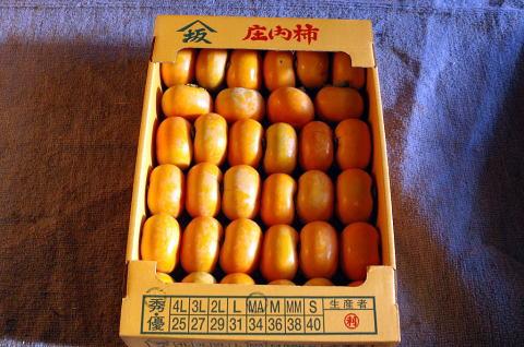 甘~い庄内柿 種無し 秀品10kg 産地直送(生産者)