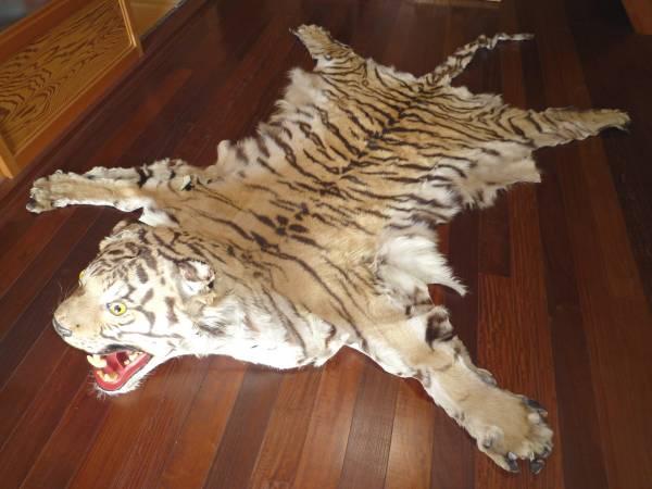 珍品 虎(トラ、とら)のラグ 本革 本物の皮