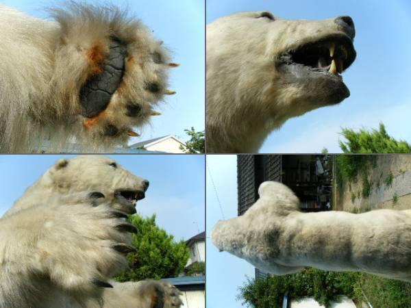 本物の白熊の剥製