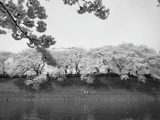090405-sakura.jpg