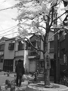 090408-takarasakura.jpg