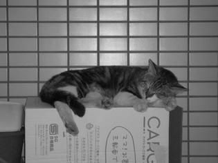 090416-musashi.jpg