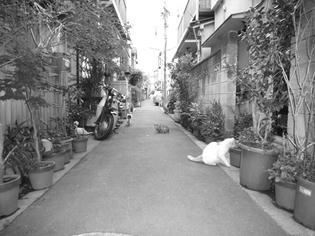 090423-tachibana-2.jpg